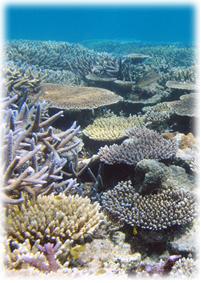 珊瑚シリーズとは
